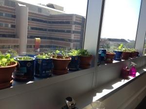 Window Garden at ECHA